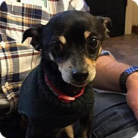 Adopt A Pet :: Sambi - Pittsburgh, PA