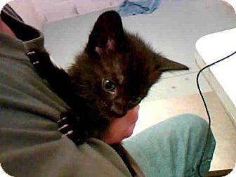 Domestic Mediumhair Kitten for adoption in Conroe, Texas - NIGHT