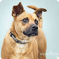 Adopt A Pet :: RAISIN - Phoenix, AZ