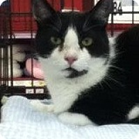 Adopt A Pet :: Winston - Riverside, RI