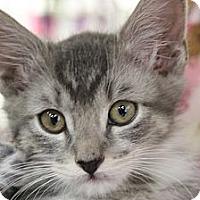 Adopt A Pet :: Burton - Santa Monica, CA