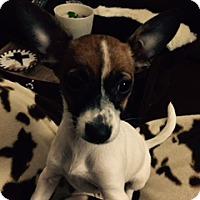 Adopt A Pet :: Toi In Dallas - Dallas/Ft. Worth, TX