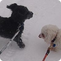 Adopt A Pet :: CHLOE - Coudersport, PA