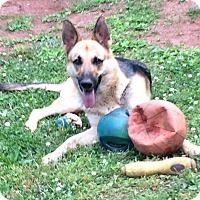 Adopt A Pet :: Samantha (Guest) - Roswell, GA