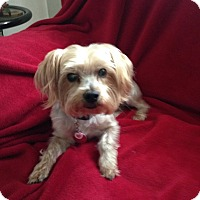 Adopt A Pet :: Canelo - Elkhart, IN