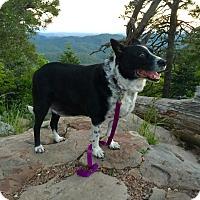Adopt A Pet :: Lucky - Tempe, AZ