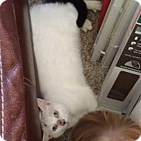 Adopt A Pet :: Napoleon - Tampa, FL