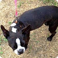Adopt A Pet :: GARTH BROOKS - Weatherford, TX