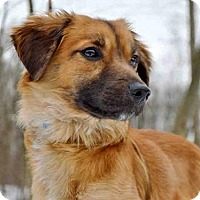 Adopt A Pet :: BOOMBOOM - Pittsburgh, PA