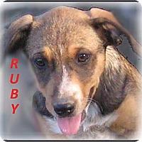 Adopt A Pet :: Ruby- Adoption Pending - Marlborough, MA