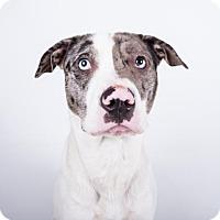 Adopt A Pet :: Nemo - Decatur, GA