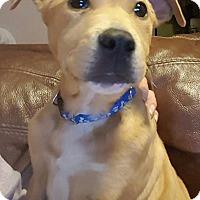 Adopt A Pet :: Ace - Barnegat, NJ