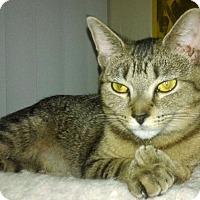 Adopt A Pet :: Chrissy - Troy, MI