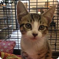 Adopt A Pet :: Owen - Sarasota, FL