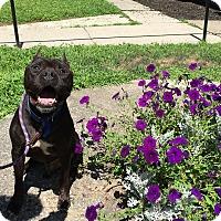 Adopt A Pet :: Blaze - Walden, NY