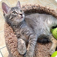 Adopt A Pet :: PAIGE aka PEACHES - Hamilton, NJ