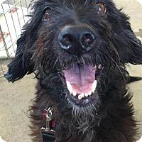 Adopt A Pet :: Jasmine - Encino, CA