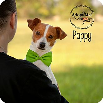 Terrier (Unknown Type, Medium) Mix Dog for adoption in Friendswood, Texas - Pappy