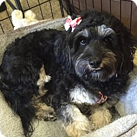 Adopt A Pet :: Pepper - Brea, CA