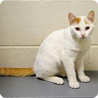 Adopt A Pet :: Chance - Parsons, KS
