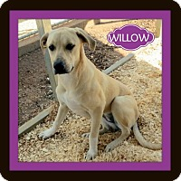 Adopt A Pet :: Willow - Granbury, TX