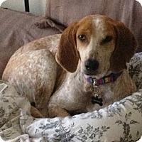 Adopt A Pet :: Georgia - Lexington, MA