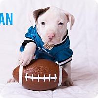 Adopt A Pet :: Sean - Garden City, MI
