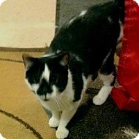 Adopt A Pet :: Fitzy - Fowlerville, MI