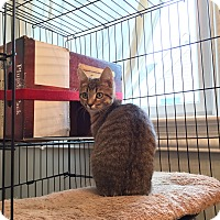 Adopt A Pet :: Cheetah - Virginia Beach, VA
