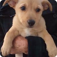 Adopt A Pet :: New Belgium - Fort Collins, CO