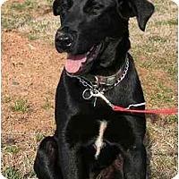 Adopt A Pet :: Maggie - Cumming, GA