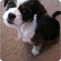 Adopt A Pet :: Josephine - Arlington, TX