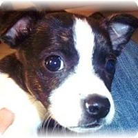 Adopt A Pet :: JOEY - Wakefield, RI
