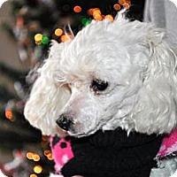 Adopt A Pet :: CANDY - Elk River, MN