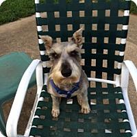 Adopt A Pet :: King George - Salem, NH