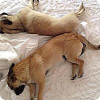 Adopt A Pet :: Dottie - Anaheim, CA