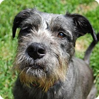 Adopt A Pet :: Halibut - Spartanburg, SC