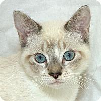 Adopt A Pet :: Karl V - Sacramento, CA