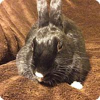 Adopt A Pet :: Mila - Watauga, TX
