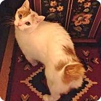 Adopt A Pet :: Yuki - Davis, CA