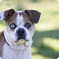 Adopt A Pet :: CHARLA - Weatherford, TX