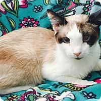 Adopt A Pet :: Bazoomba - Addison, IL