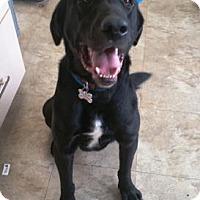 Adopt A Pet :: JB - Chicago, IL