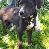 Adopt A Pet :: Weston - New Oxford, PA
