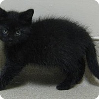 Adopt A Pet :: Traci - Gary, IN