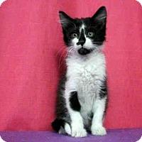 Adopt A Pet :: *MORRISON - Sugar Land, TX