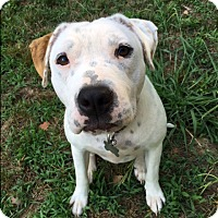 Adopt A Pet :: Tee - Reduced Fee! - Hagerstown, MD