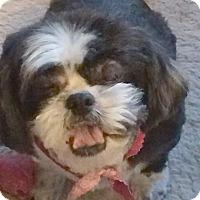 Adopt A Pet :: Cheyenne - Homer Glen, IL
