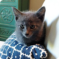 Adopt A Pet :: Yub Yub - Austin, TX