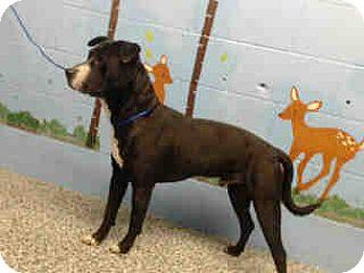 Labrador Retriever Mix Dog for adoption in San Bernardino, California - URGENT on 10/11 SAN BERNARDINO